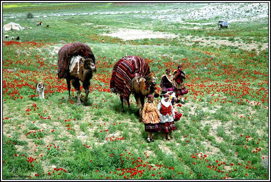 کوچ عشایرکرمانج در شمال خراسان
